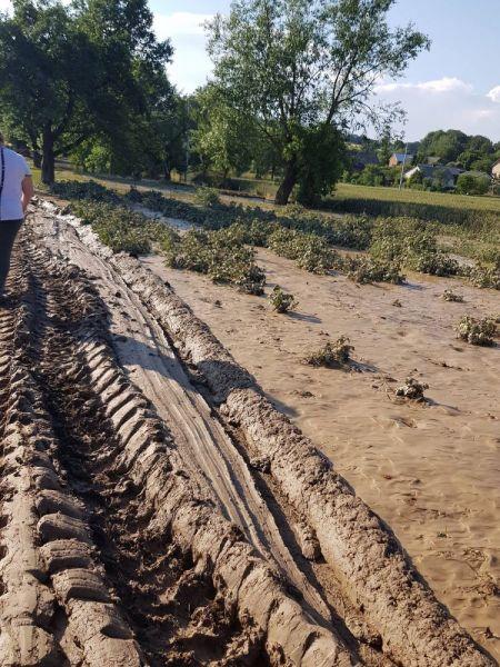 powod-cztrzecia041