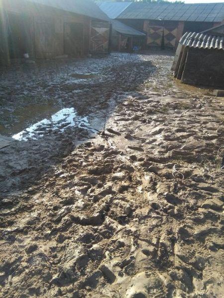 powod-cztrzecia104